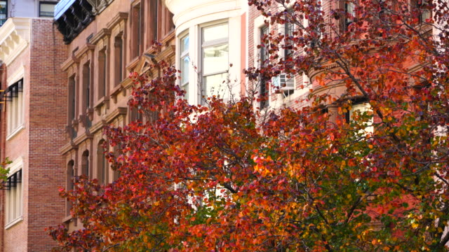 vídeos y material grabado en eventos de stock de autumn color trees around the upper east residential buildings at manhattan new york. - toma de apertura