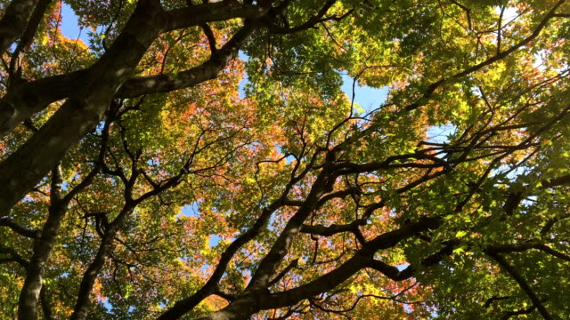 autumn colors in the park in japan - satoyama scenery stock videos & royalty-free footage