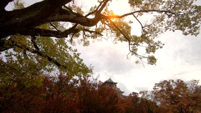 autumn colors of maple trees at osaka ,japan - shrine stock videos & royalty-free footage