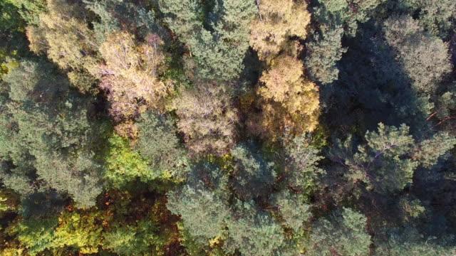 秋の色  - ネイチャーズウィンドウ点の映像素材/bロール