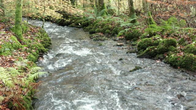 スコットランド南西部のスコットランドの森林地帯の紅葉 - johnfscott点の映像素材/bロール