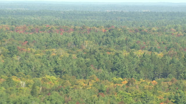 Autumn colours appear on trees in a wilderness forest, Canada. Available in HD.
