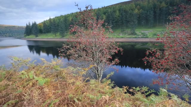 Autumn colours, Derwent Reservoir, Derbyshire, Peak District National Park, England, UK
