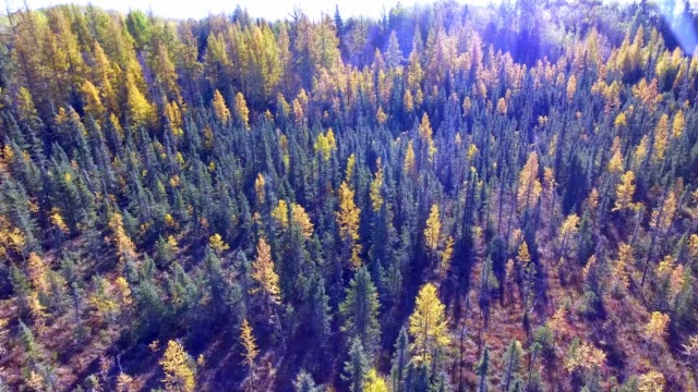 Autumn colours over a boreal forest
