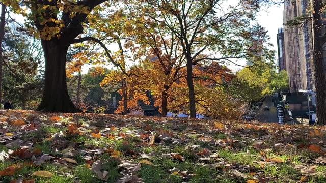 vídeos de stock, filmes e b-roll de dia de outono em um parque do brooklyn - árvore de folha caduca