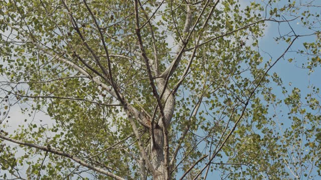 autumn deciduous tree - deciduous tree stock videos & royalty-free footage