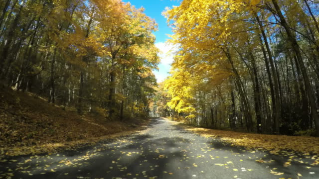 autumn drive in central massachusetts - moving down stock videos & royalty-free footage