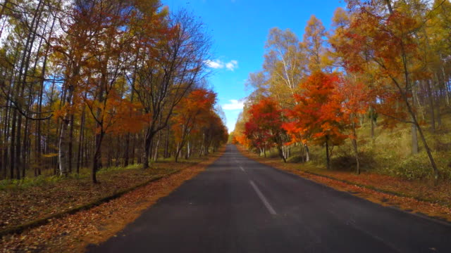 autumn drive - autumn leaf color stock videos and b-roll footage