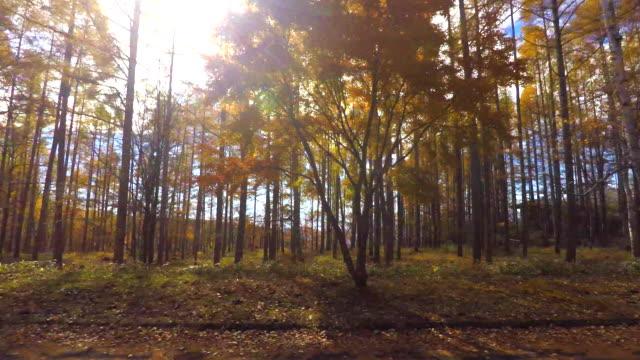 autumn drive - plusphoto stock videos & royalty-free footage