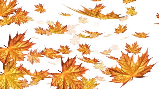 Autumn falling leafs on white background