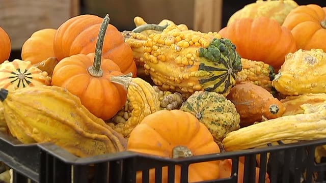 wgn autumn farmers market gourds at farmers market on october 27 2013 in skokie illinois - gourd stock videos and b-roll footage
