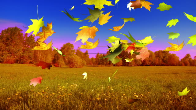 autumn field and forest - maple tree stock videos and b-roll footage