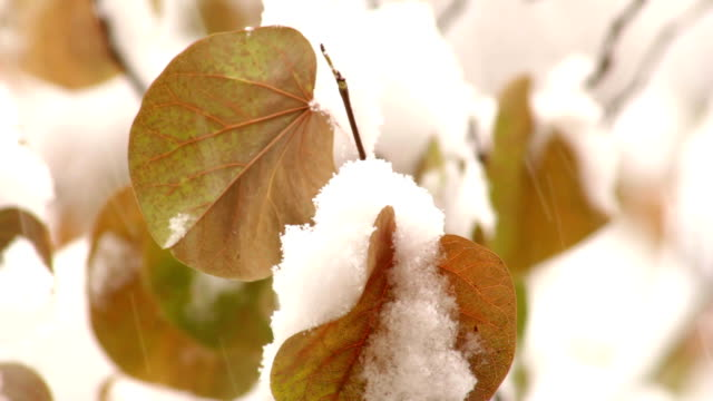 Autumn first snow