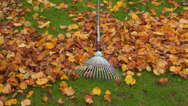 vídeos de stock e filmes b-roll de autumn foliage and rake on lawn, kastel-staadt, rhineland-palatinate, germany, europe - ancinho equipamento de jardinagem