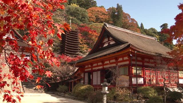 autumn foliage at the tanzan shrine - shrine stock videos & royalty-free footage