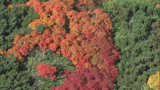 autumn foliage covers mount asahi. - daisetsuzan volcanic group stock videos and b-roll footage