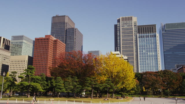 autumn foliage in marunouchi - marunouchi stock videos & royalty-free footage