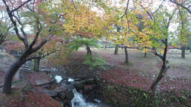 autumn foliage in nara park, japan - nara prefecture stock videos and b-roll footage