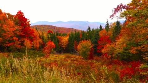 stockvideo's en b-roll-footage met herfst gebladerte in de witte bergen van new hampshire - autumn