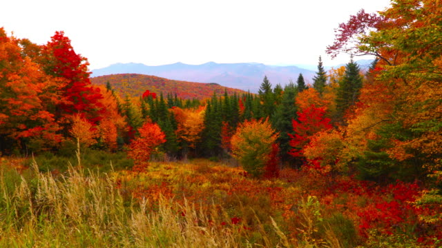 autumn foliage in the white mountains of new hampshire - autumn leaf color stock videos and b-roll footage