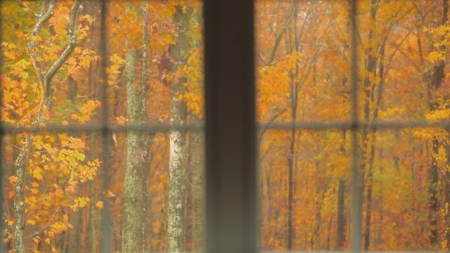 Autumn Foliage leaves Falling Slowly