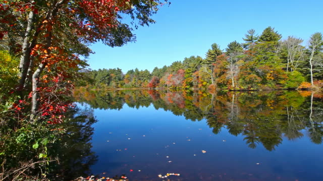autumn foliage - pond stock videos & royalty-free footage
