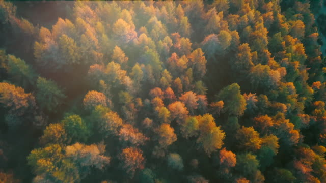 autumn  forest aerial view - pine stock videos & royalty-free footage