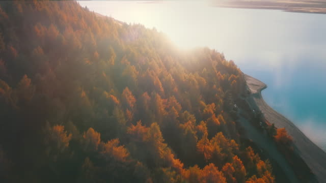autumn  forest aerial view - alder tree stock videos & royalty-free footage