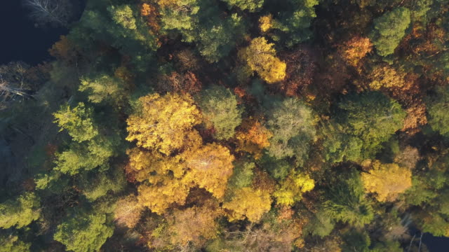 autumn forest aerial view - wood material stock videos & royalty-free footage