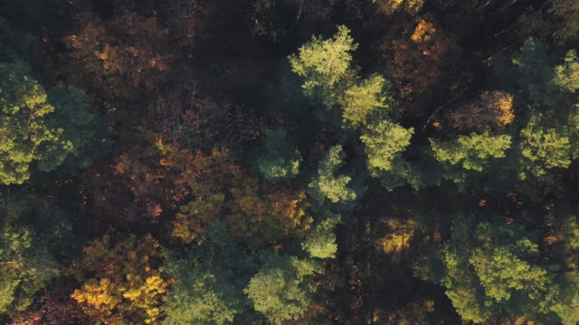 autumn forest aerial view - svezia video stock e b–roll