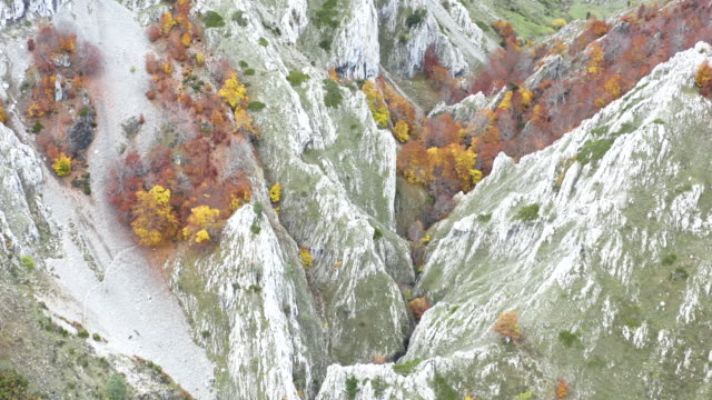 autumn forest and mountain landscape, aerial view - treetop stock videos & royalty-free footage