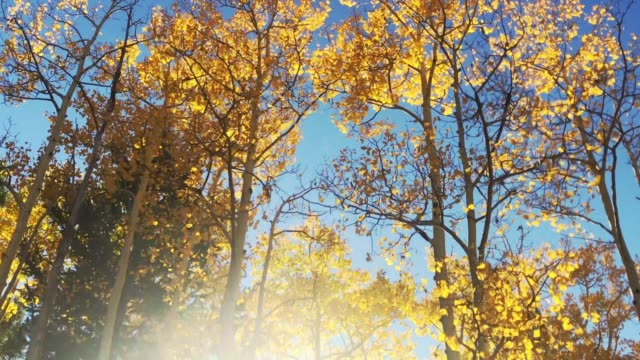 autumn forest color and movement - santa fe new mexico stock videos & royalty-free footage