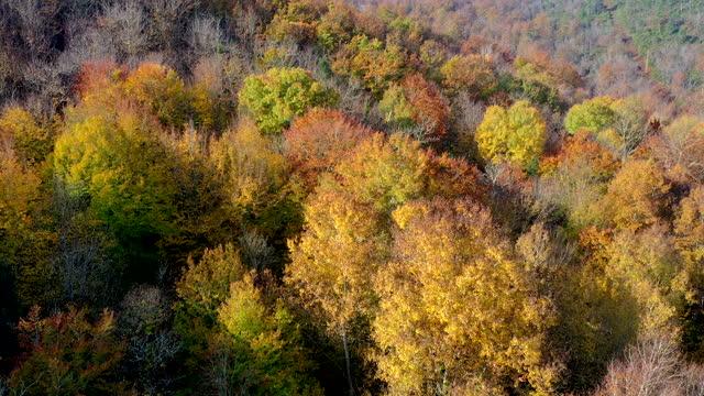 vídeos y material grabado en eventos de stock de autumn forest in siena countryside, tuscany, italy - árbol de hoja caduca