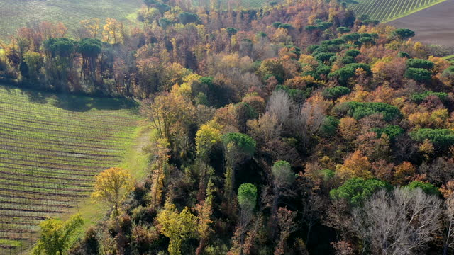 vidéos et rushes de autumn forest in tuscany countryside, italy - pinacée