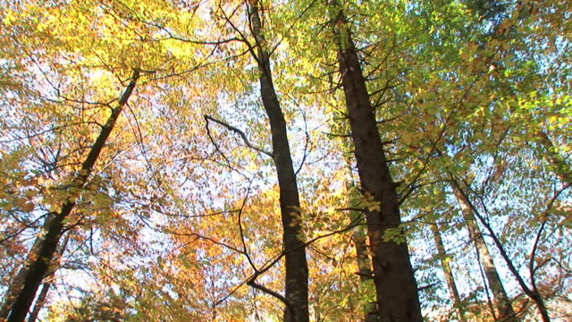 vidéos et rushes de hd: forêt d'automne - image contrastée