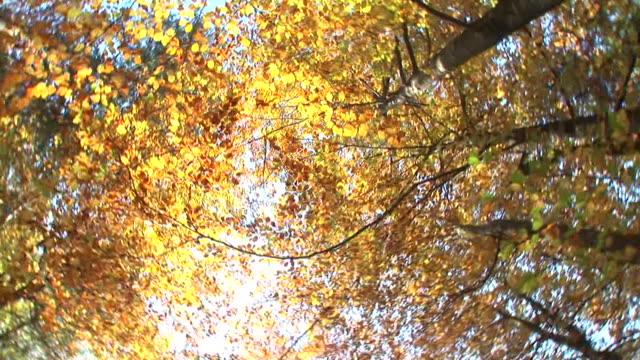 hd : 秋の森 - ハイコントラスト点の映像素材/bロール