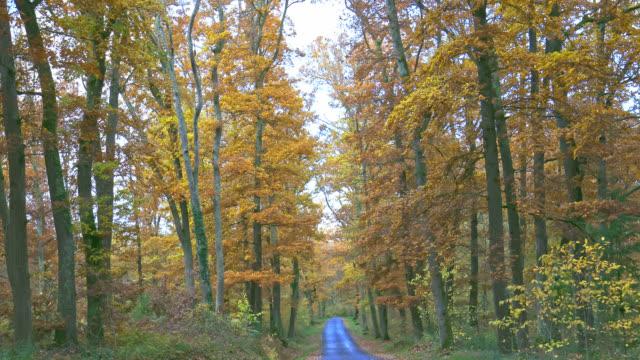 vidéos et rushes de autumn forest - vincent pommeyrol
