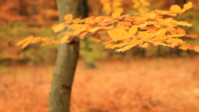 hd dolly: autumn forest - light natural phenomenon stock videos & royalty-free footage