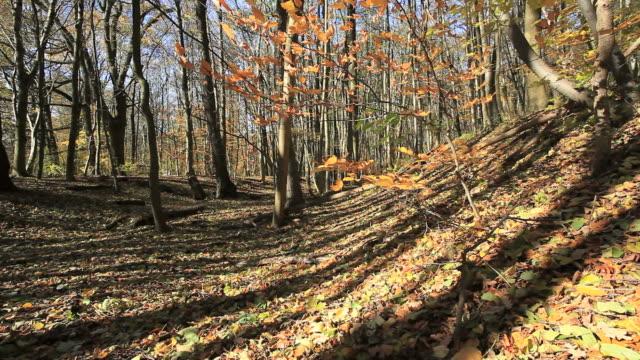 foresta d'autunno - novembre video stock e b–roll