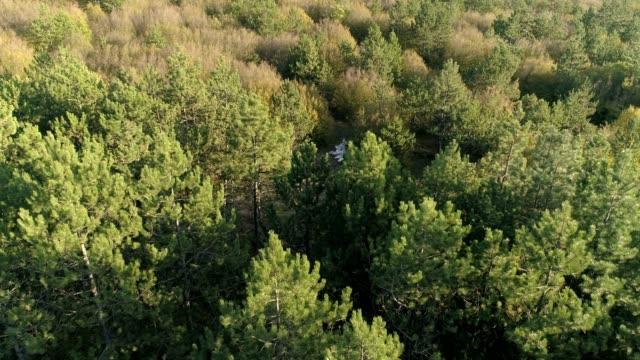 vídeos y material grabado en eventos de stock de bosque de otoño - pinar