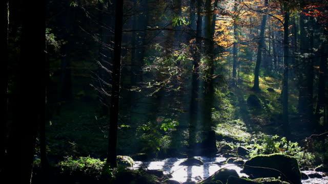 vídeos de stock, filmes e b-roll de floresta de outono em hd com creek (circulares - floresta da bavária