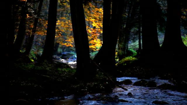 vídeos de stock, filmes e b-roll de floresta de outono com creek (circulares) - floresta da bavária