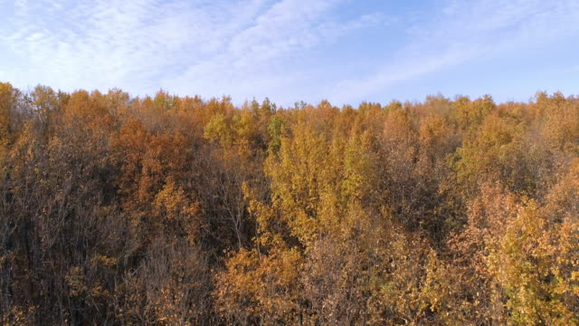 autumn forest with deciduous trees - deciduous stock videos & royalty-free footage