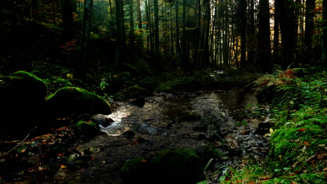 autumn forest with natural stream - moss stock videos & royalty-free footage