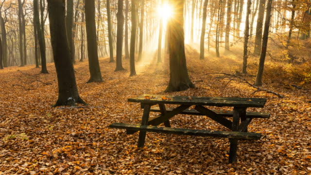 herbstlicher wald mit park bench (time lapse 4 k - sitzbank stock-videos und b-roll-filmmaterial
