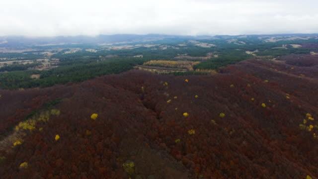 しおれさせた葉を持つ空中: 秋フォレスト - クワッドコプター点の映像素材/bロール