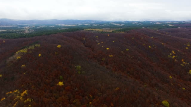 AERIAL: Autumn forest with wilted leaves