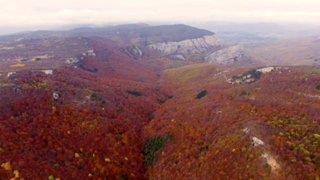 Antenne: Herbst-Wald mit welken Blättern auf Bergrücken