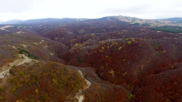 AERIAL: Autumn forest with withered leaves on mountain ridge