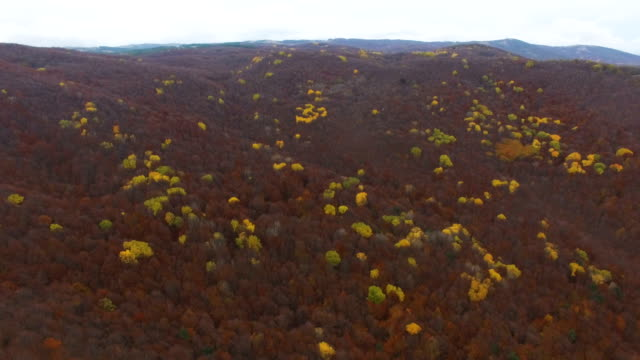 AERIAL: Autumn forest with withered leaves